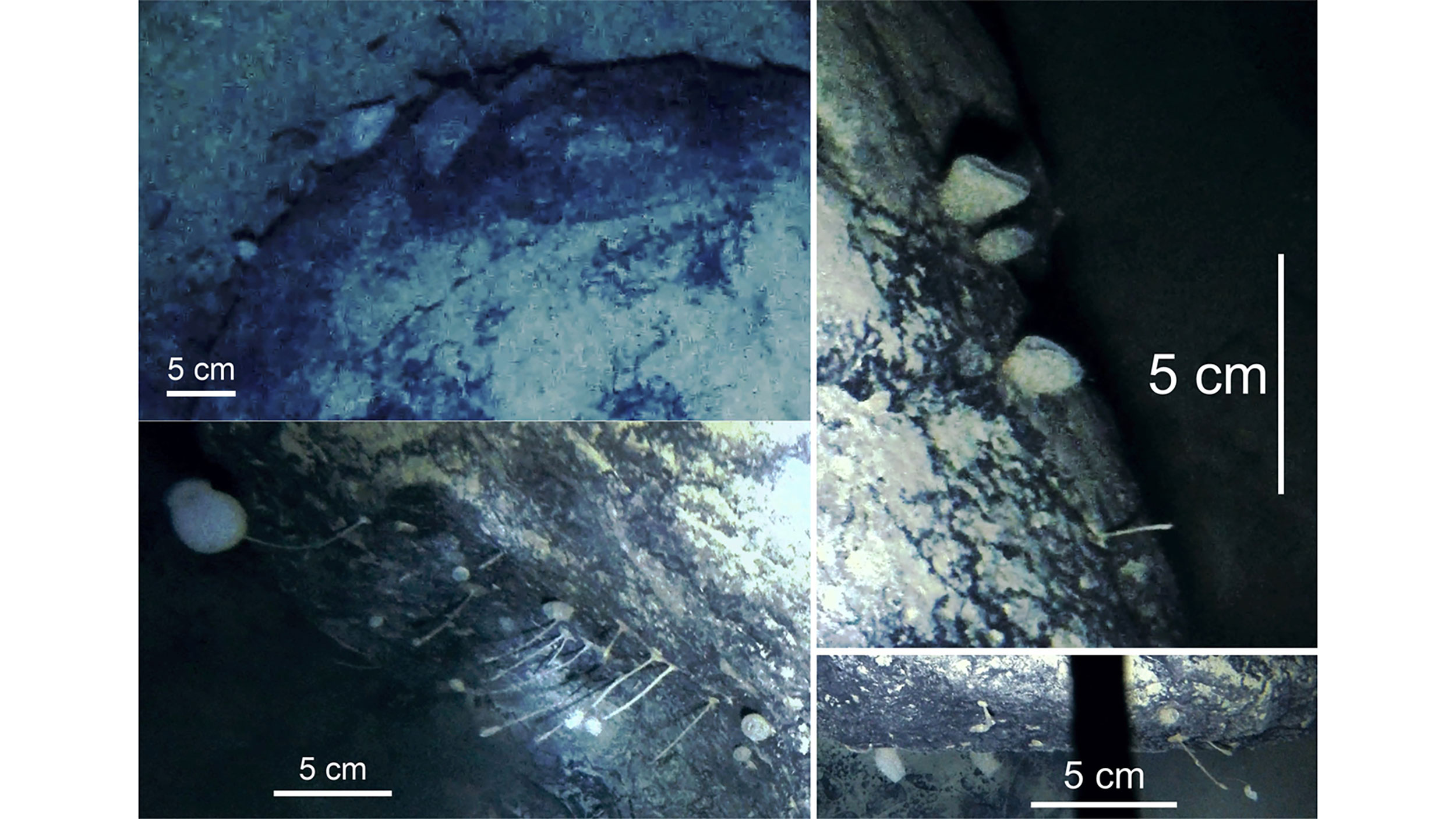 Antarctic sponges discovered under the ice shelf perplex scientists