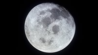 Apollo 11 lunar samples were searched for signs of life
