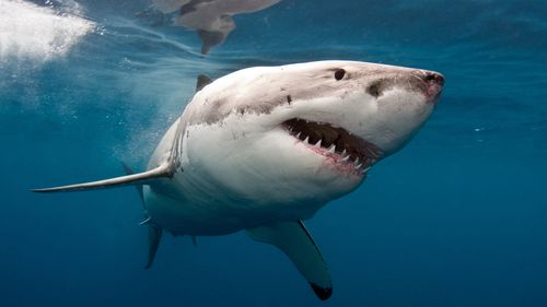 Image for Man killed in shark attack at popular Western Australia beach