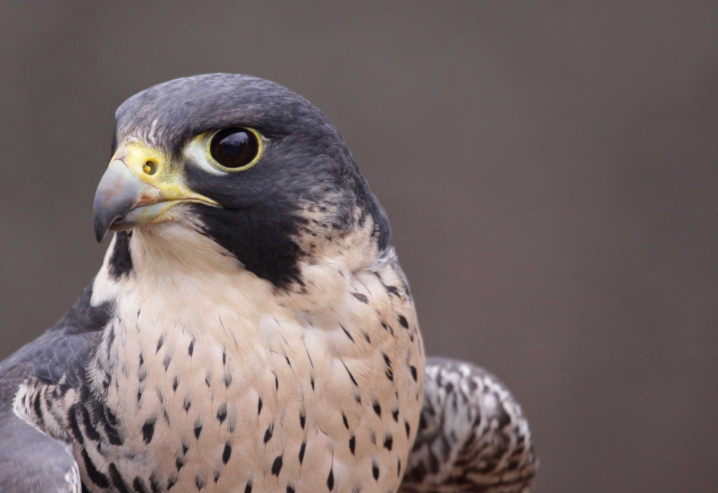 Birds that learn new behaviors less likely to go extinct, says study
