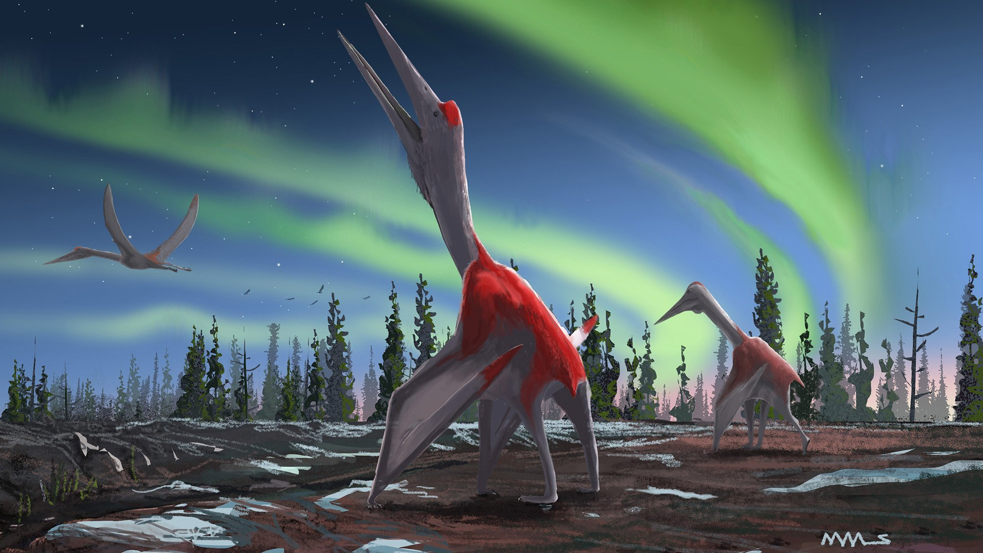 'Frozen dragon of the north wind' was one of the largest animals to ever fly