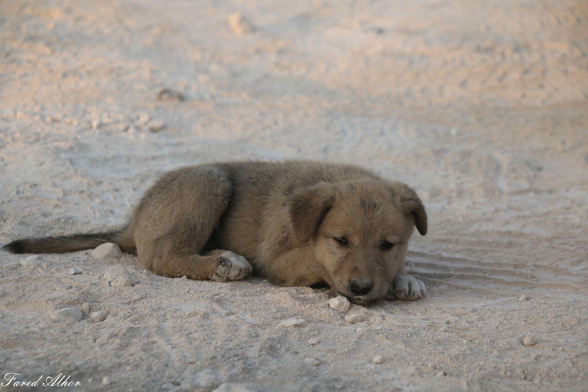 Meet Bobe, the other dog at the Baghdadi raid