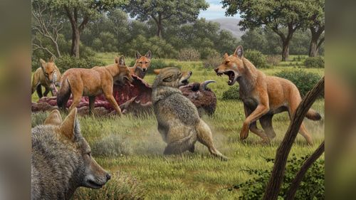 Image for Analysis of ancient DNA reveals details about the dire wolf, inspiration for 'Game of Thrones' creature