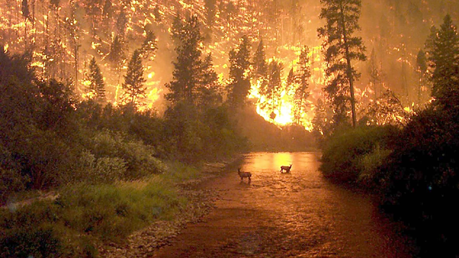 Some of the most-shared images of the Amazon rainforest fires are old or are not of the Amazon