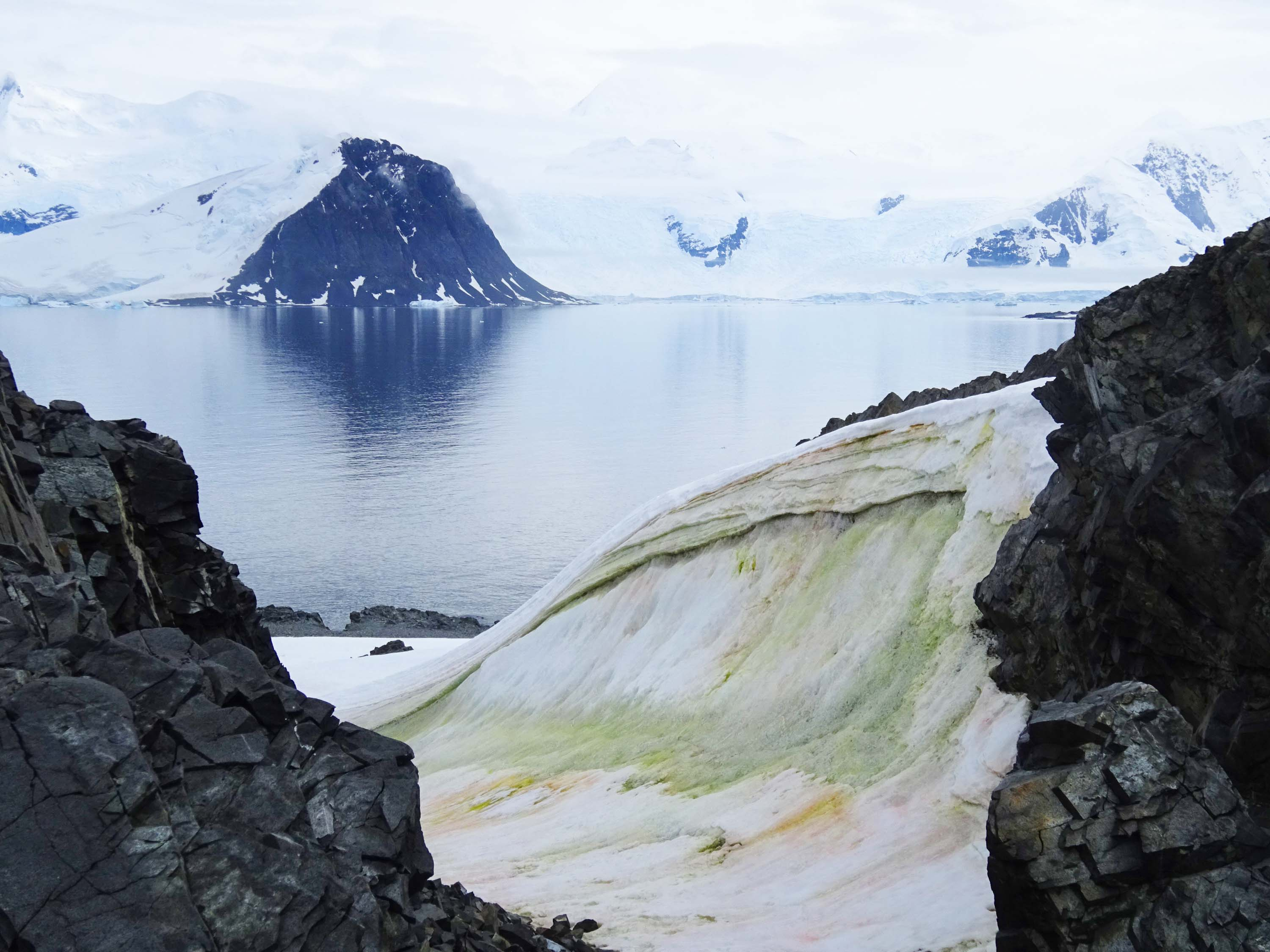 Snow is turning green in Antarctica — and climate change will make it worse