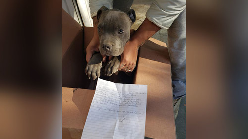 Image for A 12-year-old boy left his dog outside a shelter. A heartbreaking note explained why