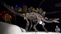 Newly discovered stegosaurus fossil is the oldest in the world