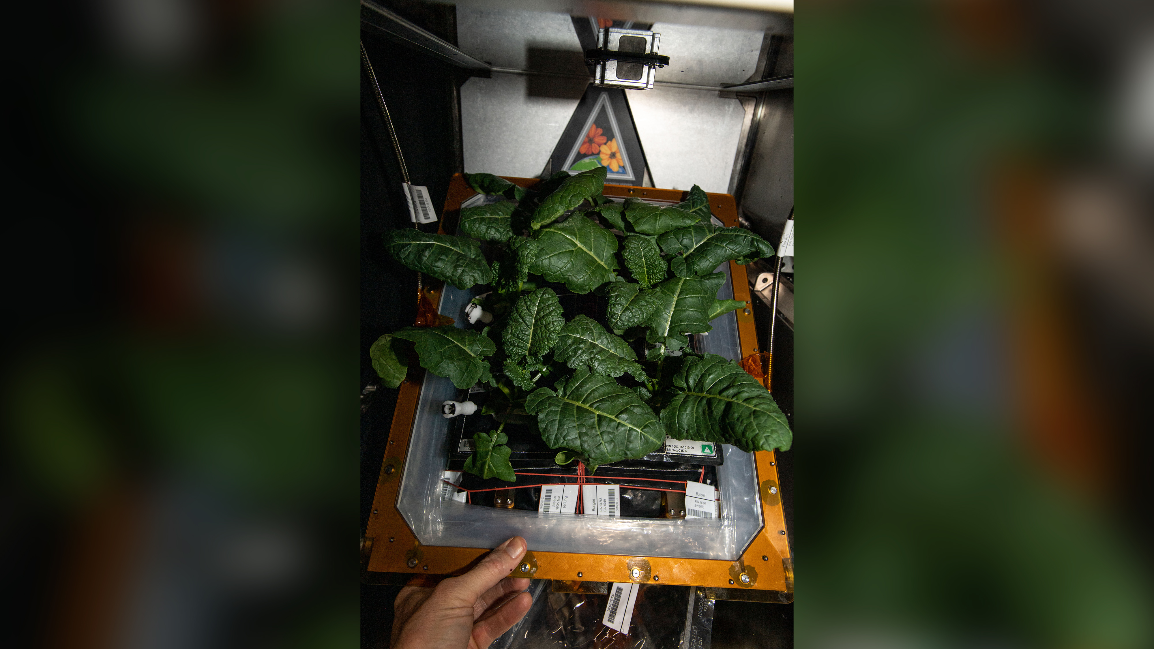 Previously unknown bacteria discovered on the space station could help grow plants