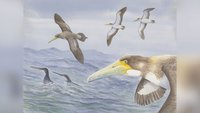 One of the world's oldest bird fossils features bony teeth