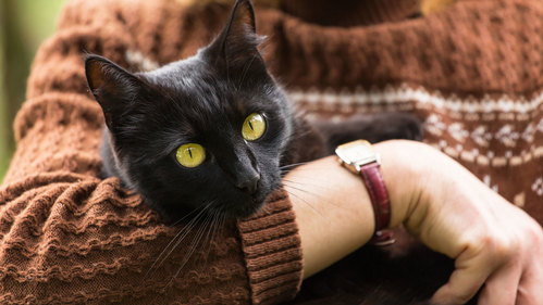 Coronavirus: Cat owners crash vet website over COVID-19 fears