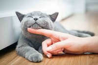 'Crazy cat ladies' are not a thing, study finds