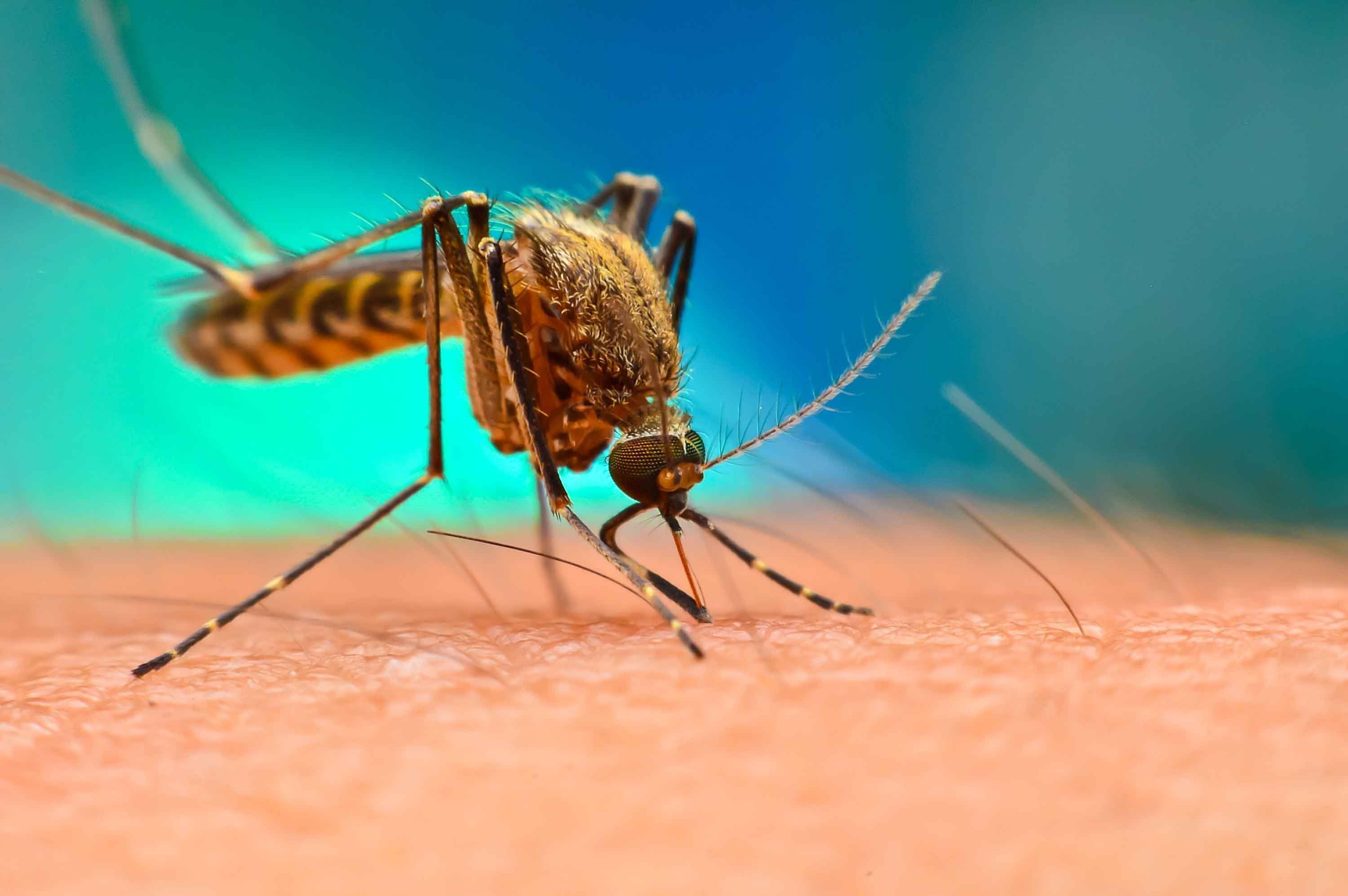 Drug-resistant malaria is spreading across Southeast Asia, study warns