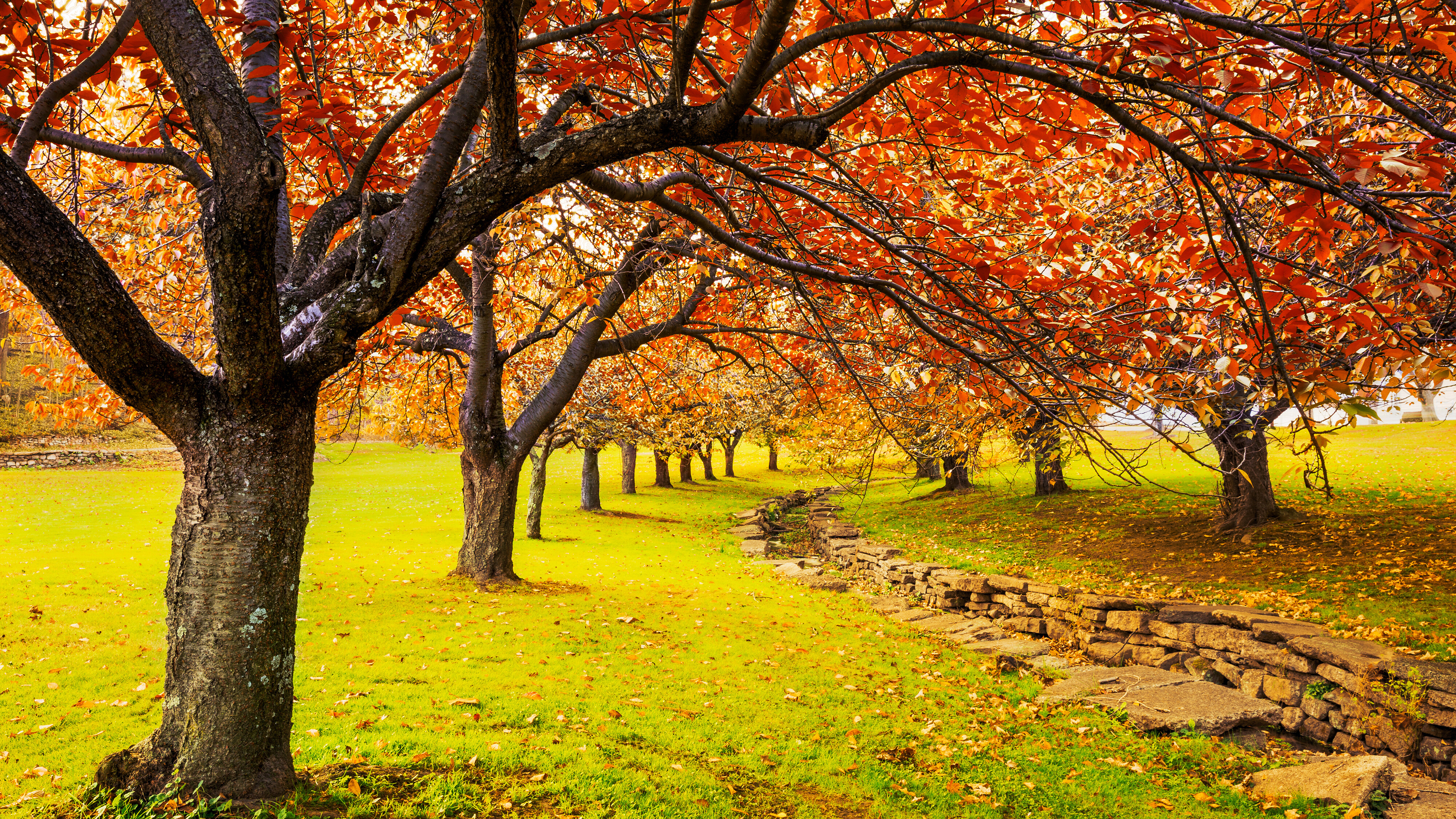 Fall: The season of cozy, delicious, wisdom-inducing rediscovery