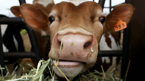 Image for There's no evidence full-fat dairy is bad for kids, study says