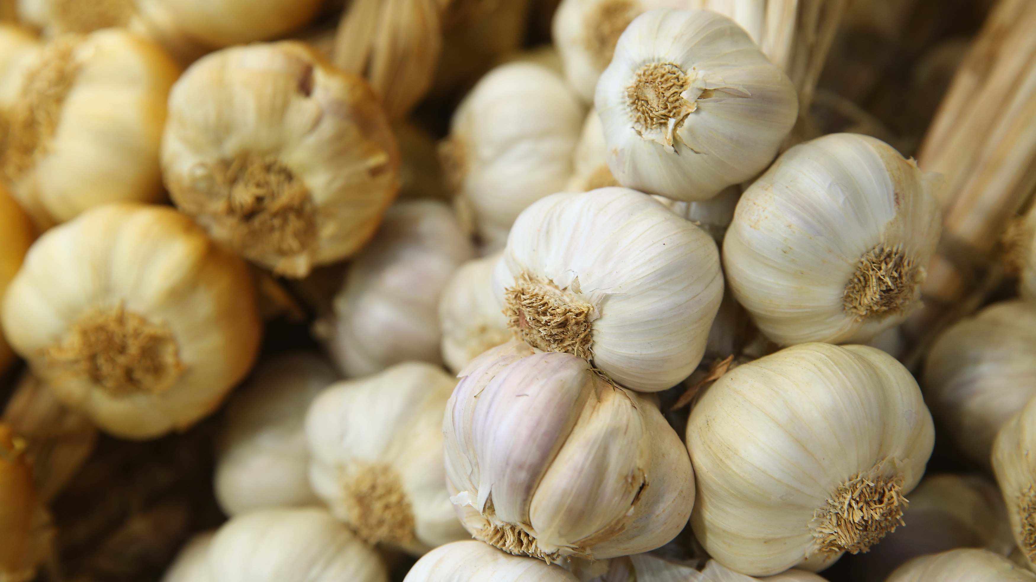 Garlic facts and history: The truth about vampires and health benefits