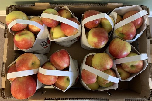 Image for A Michigan produce company is recalling apples in eight states for possible listeria contamination