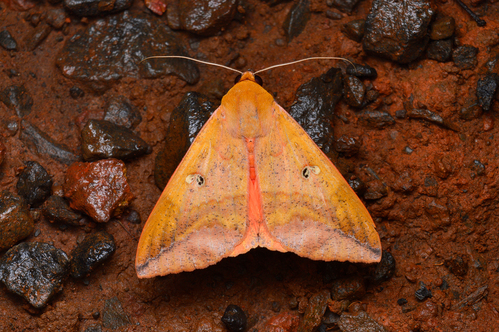 Image for Moths play a vital role in pollinating flowers and plants, new research suggests