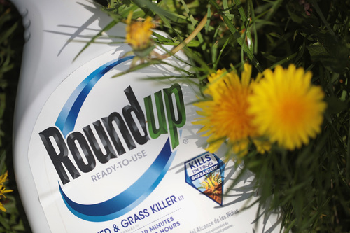 Image for Bayer settles lawsuits from cancer patients over Roundup weed killer in $10 billion agreement