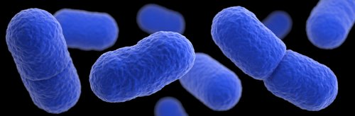 Image for Listeria outbreak infects 175 people during peak tourist season in Spain