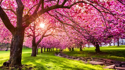 Image for Spring, the most inspiring of the seasons (this year especially)