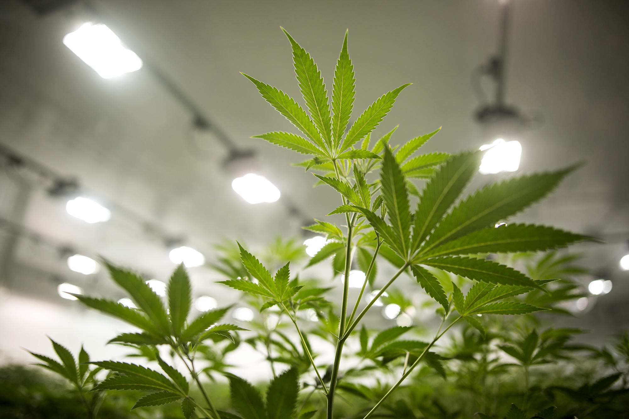 It's 4/20. Cannabis stocks are smoking hot