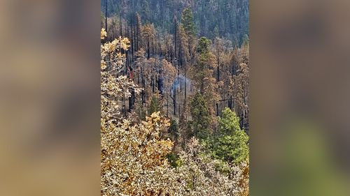 Image for A giant Sequoia tree in California is still smoldering from last year's Castle Fire