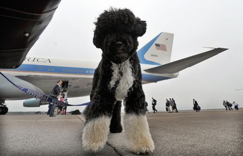 Image for Obamas announce family dog Bo has died