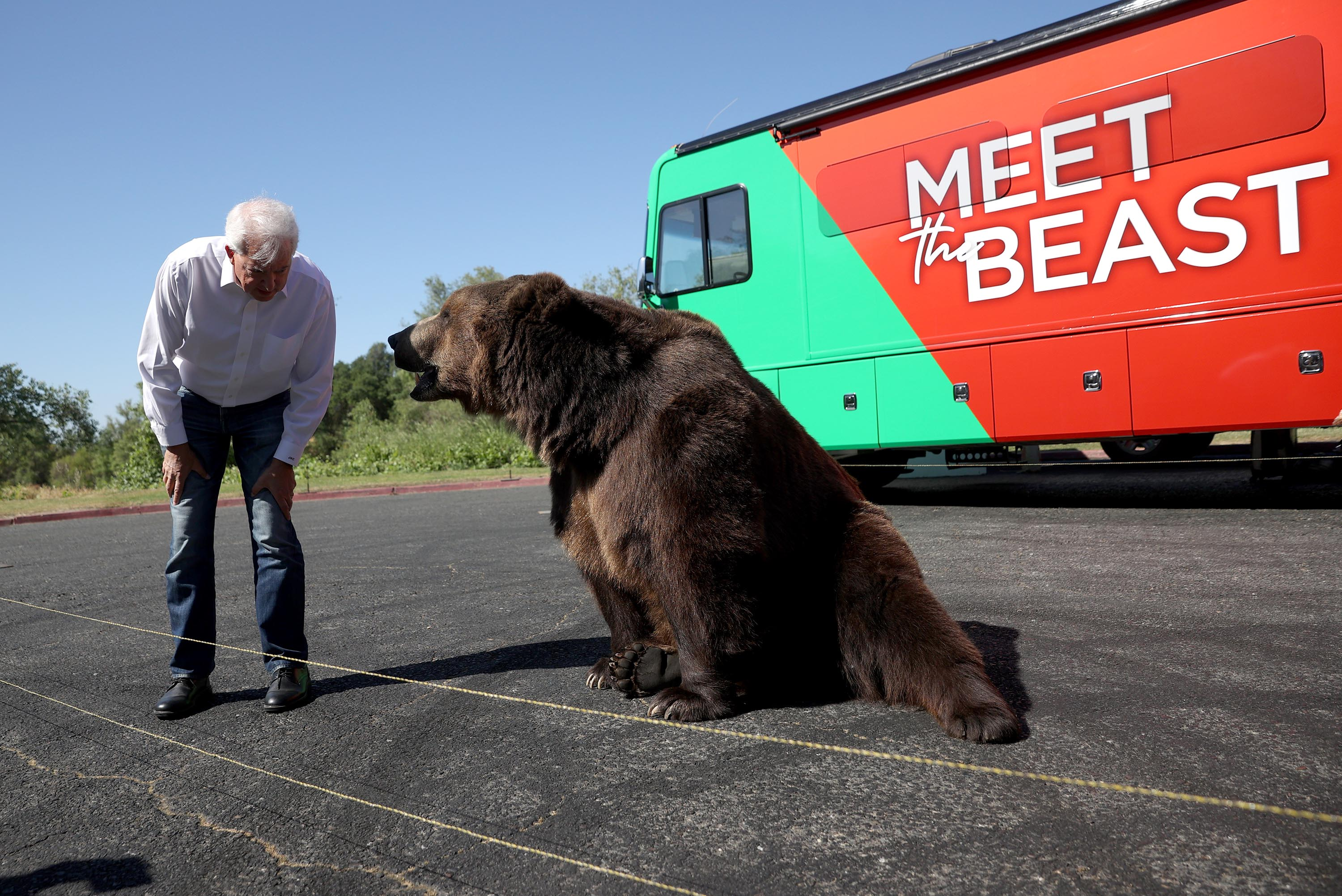 California's recall circus begins with challenger saying he's the 'beast' to Newsom's 'beauty' — alongside live bear