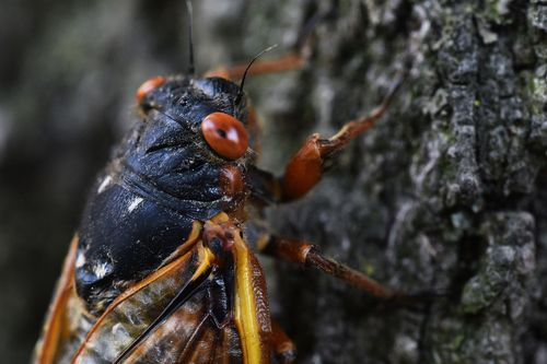 Image for White House press charter plane delayed by cicadas