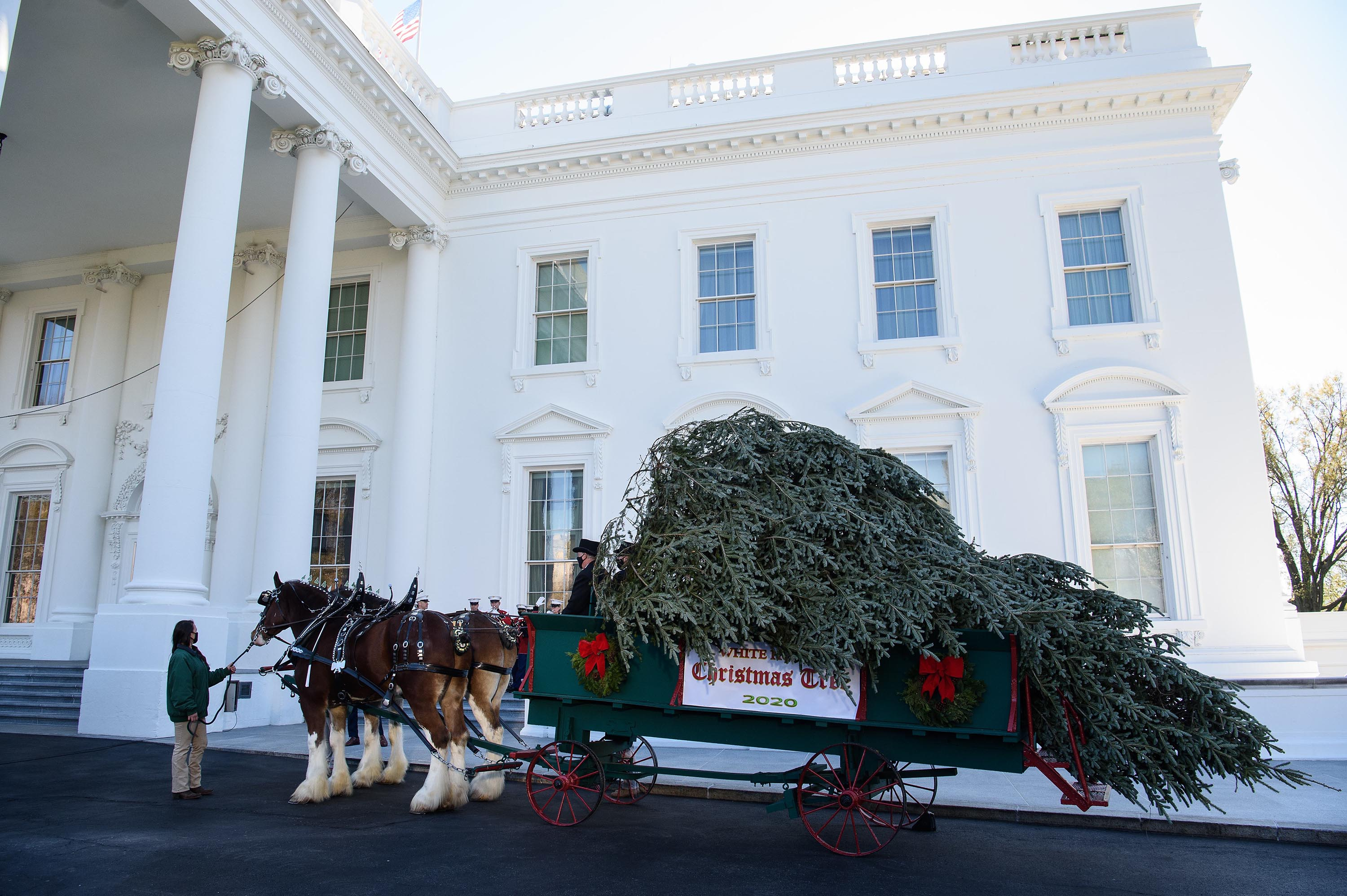 White House Christmas tree arrives, continuing tradition amid Covid-19 and election disputes