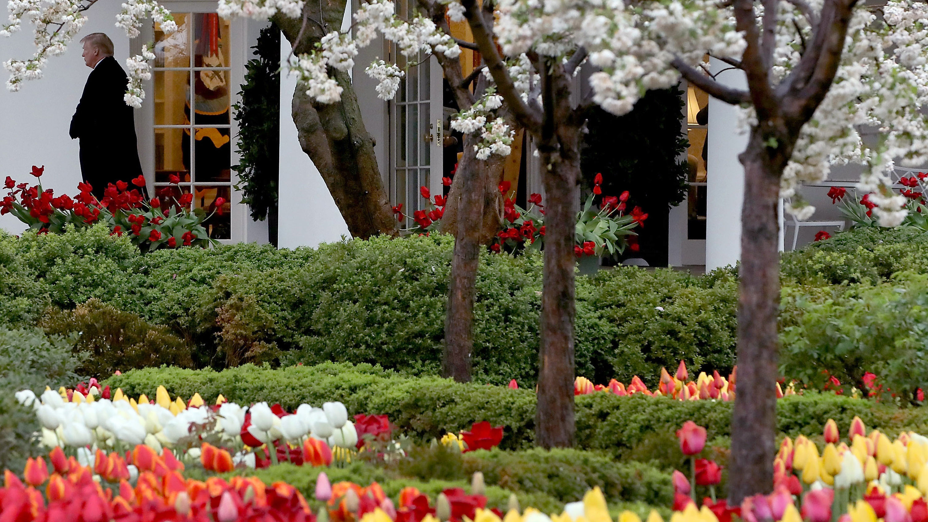 Newly renovated White House Rose Garden to be unveiled next week