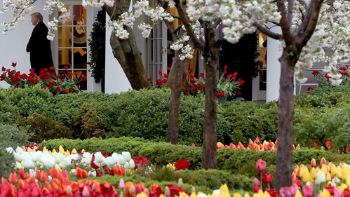 Image for Newly renovated White House Rose Garden to be unveiled next week
