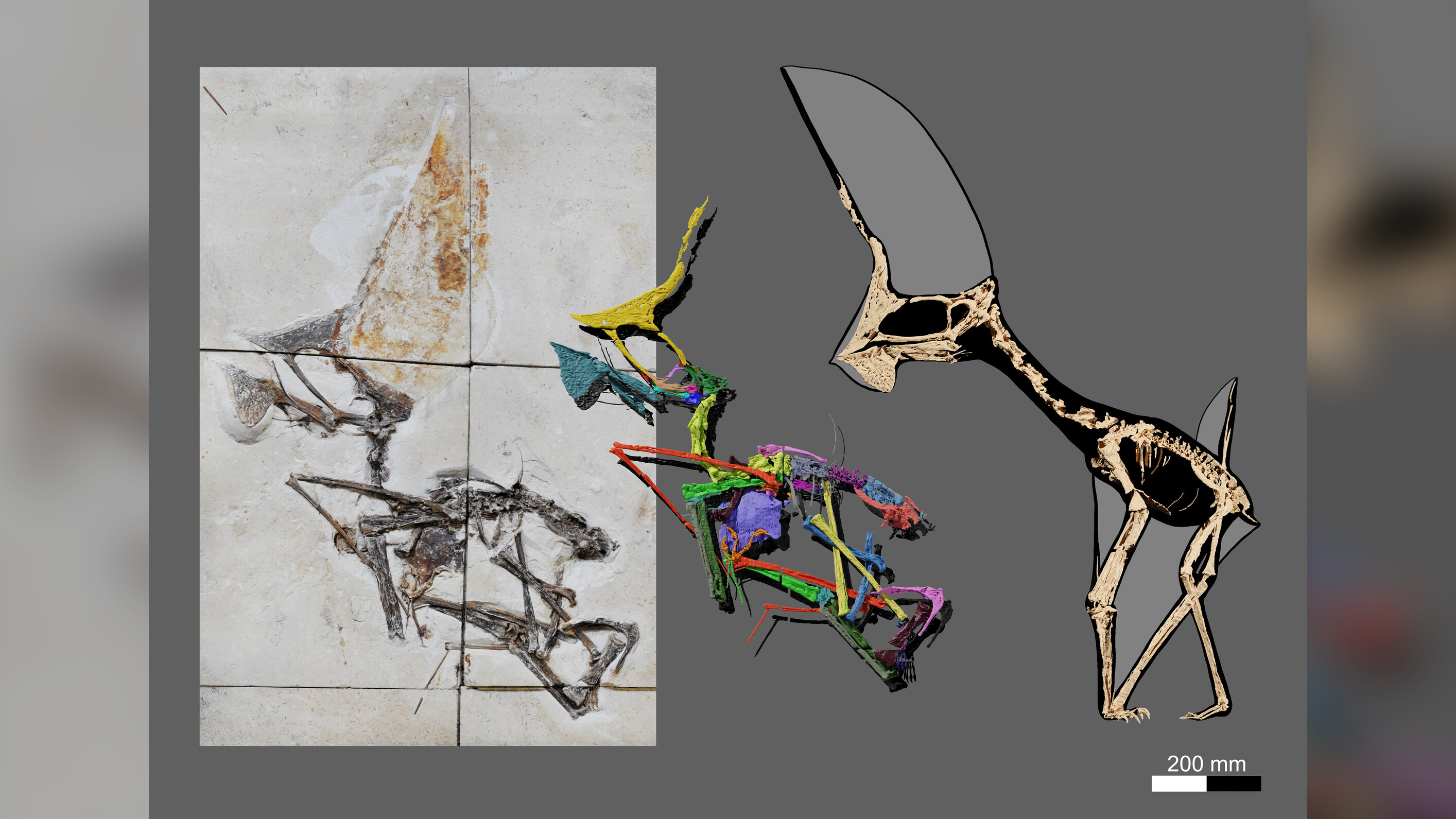 Fossil confiscated in police raid is one of the most complete pterosaur skeletons ever found