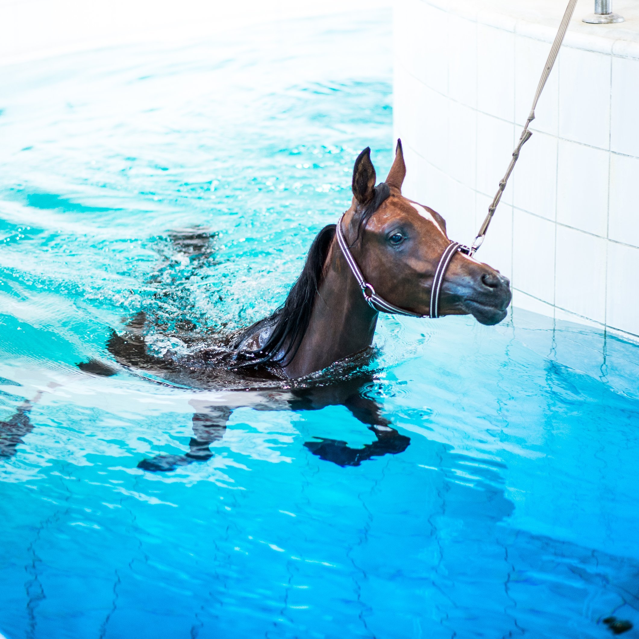 Inside the 'Hollywood' of horses, Al Shaqab is the essence of equine luxury