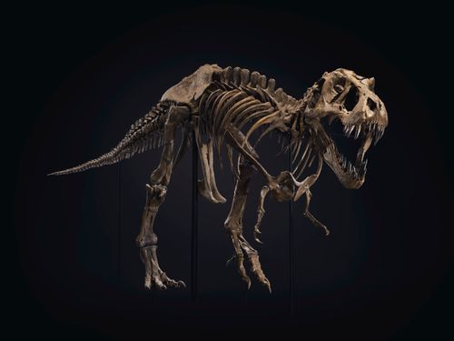 Image for Want to buy a dinosaur? One of the world's biggest T. rex skeletons is up for sale