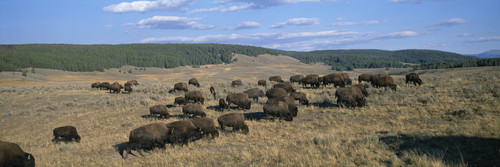 Image for Yellowstone and Grand Teton among the national parks closing immediately