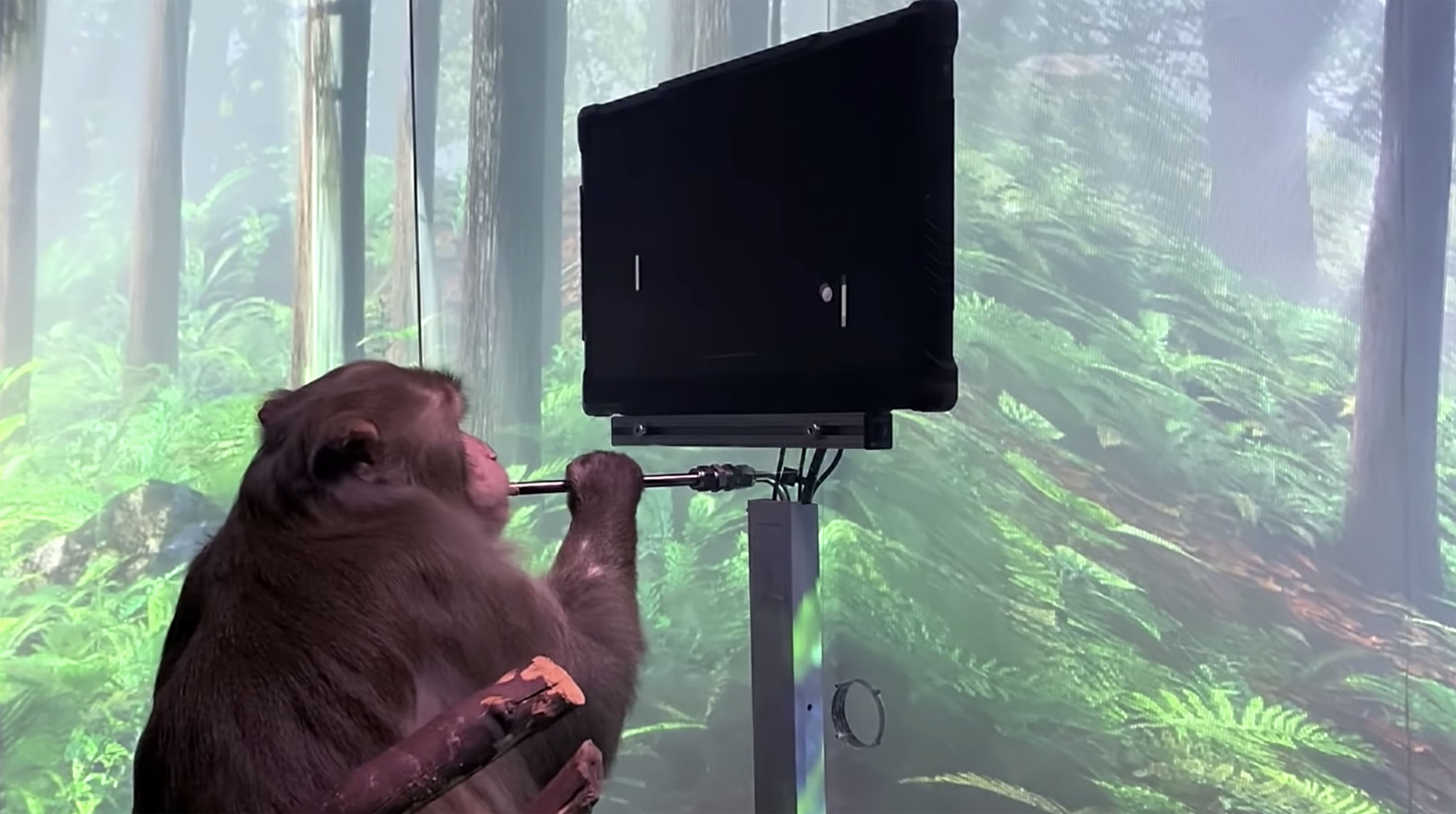 Elon Musk's Neuralink claims monkeys can play Pong using just their minds