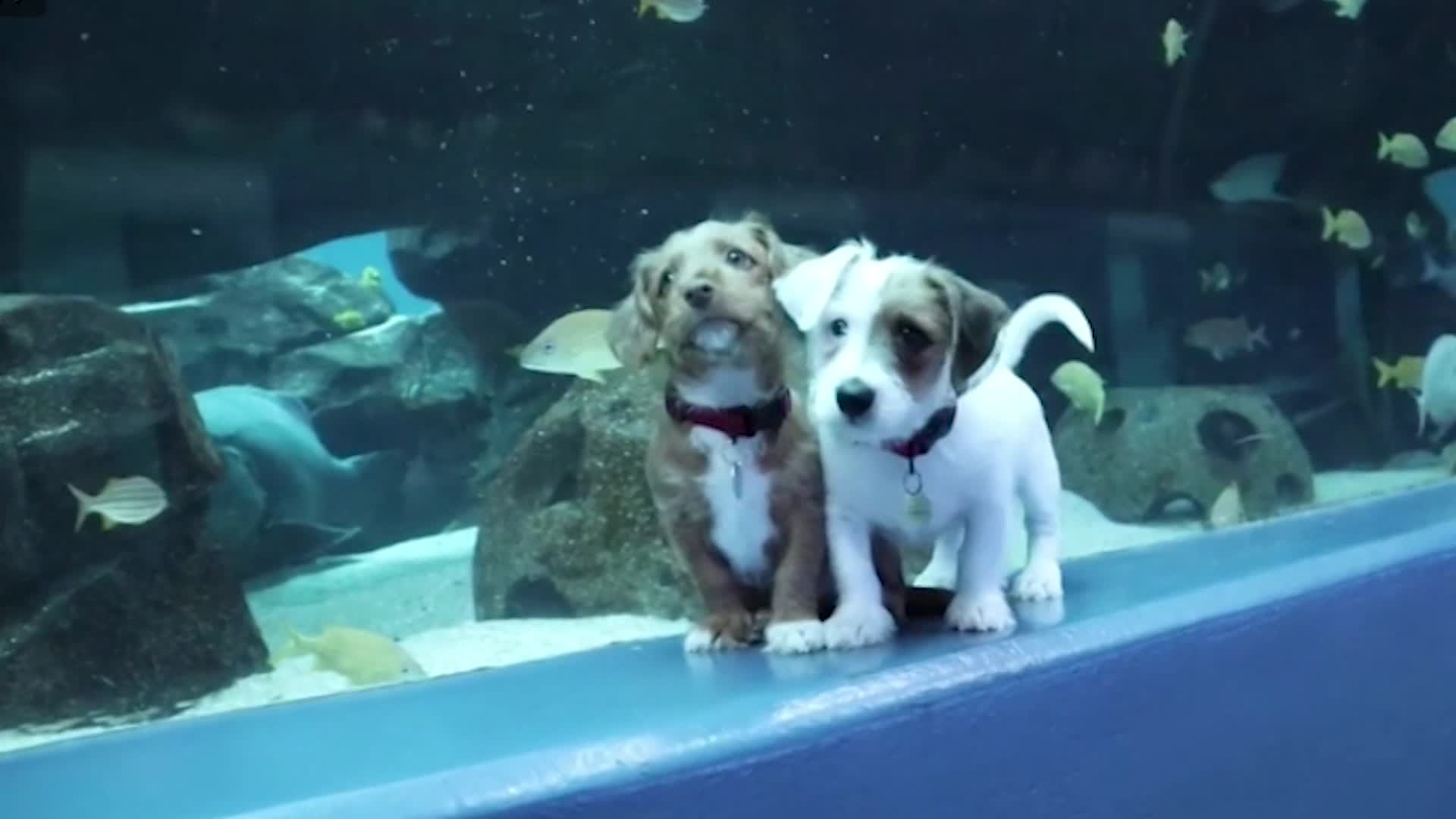The Good Stuff: Aquarium puppies, a Zoom wedding and a flower photo swap