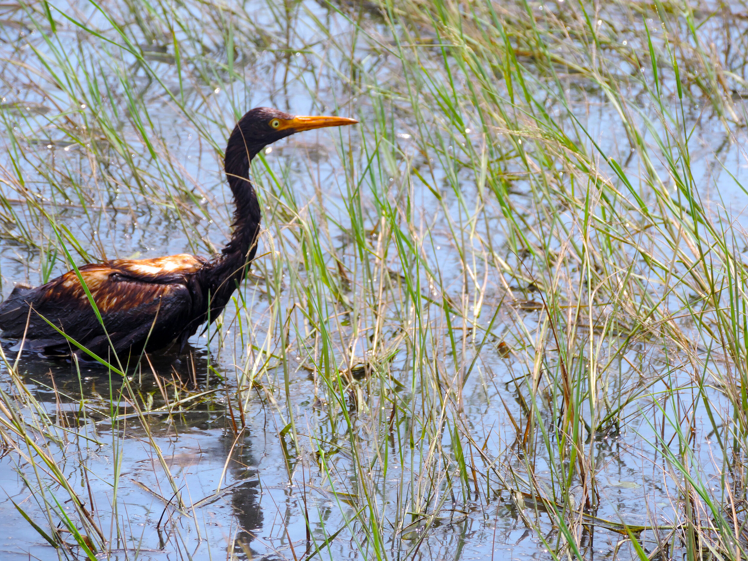 Over 100 birds have been found covered in oil as a result of spills caused by Hurricane Ida