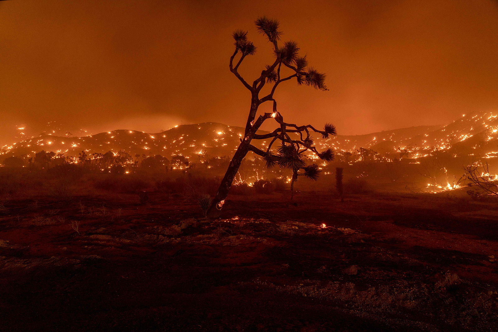 The Bobcat Fire is now one of the largest in Los Angeles County history after scorching more than 100,000 acres