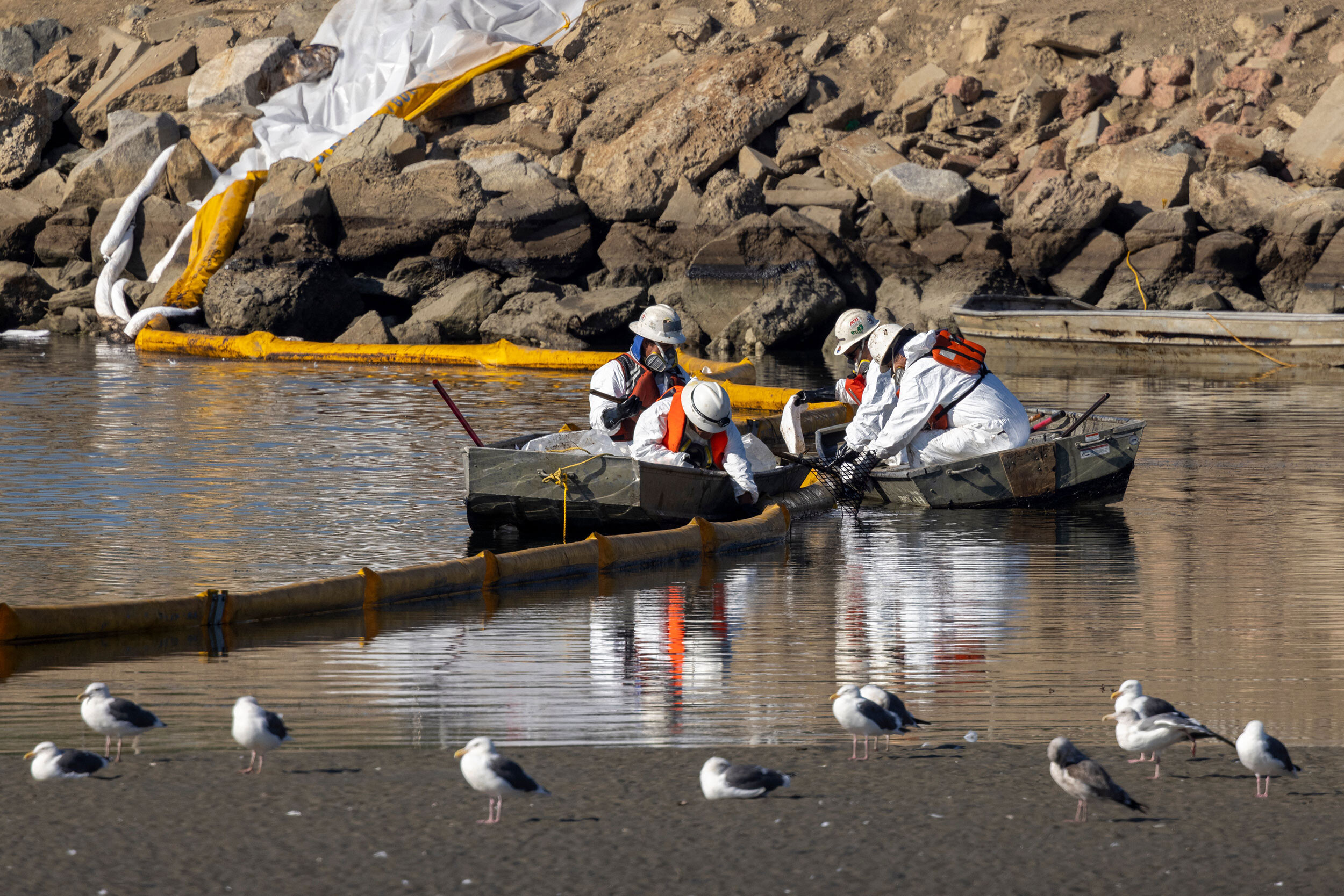 The California oil spill is endangering wildlife. Here's how authorities are trying to clean it up