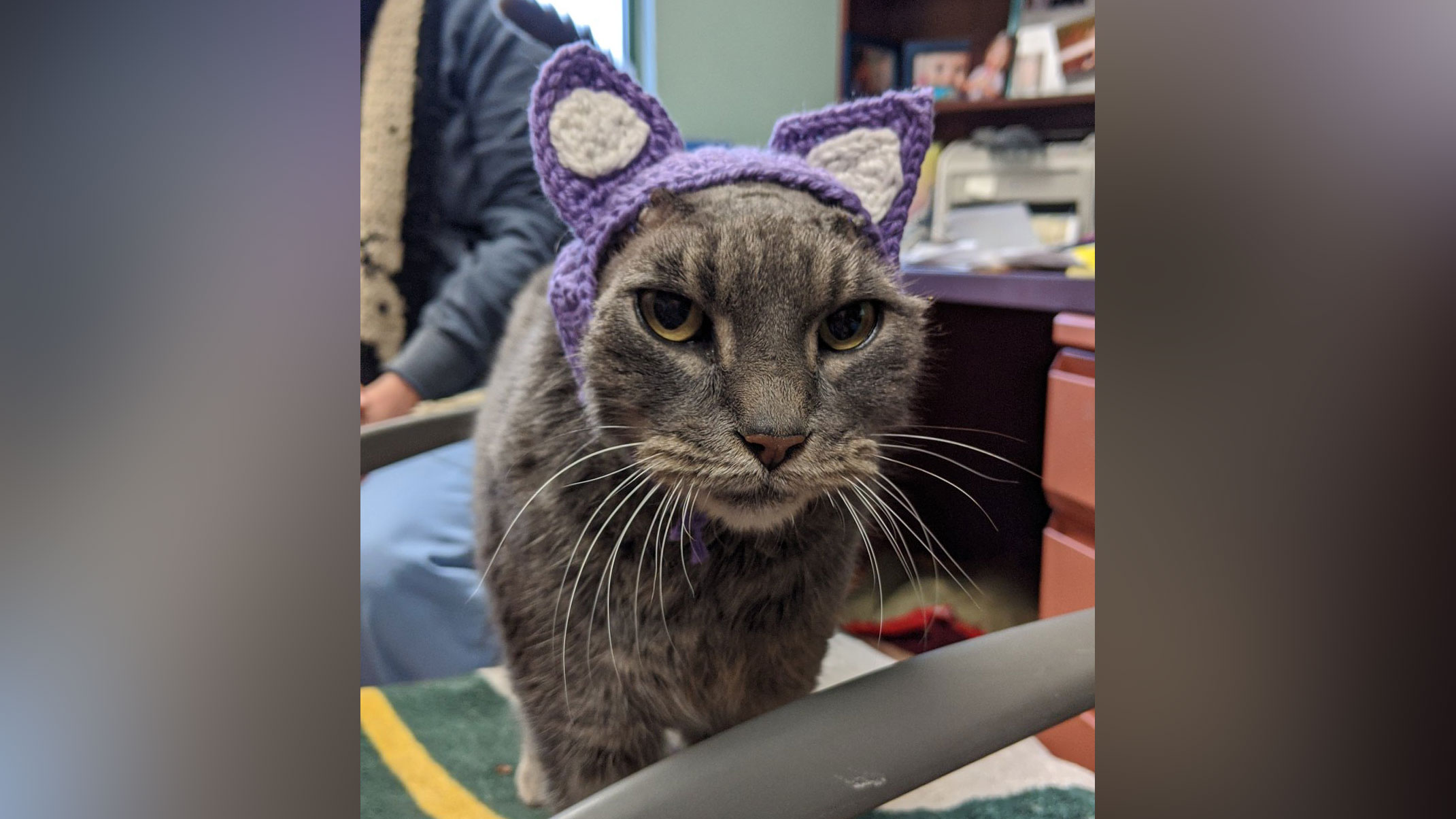 A stray cat without ears has a new set of purple ones, thanks to an animal lover who crochets