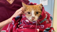 A cat shot through the head with an arrow is recovering after surgery. His rescuers named him Cupid