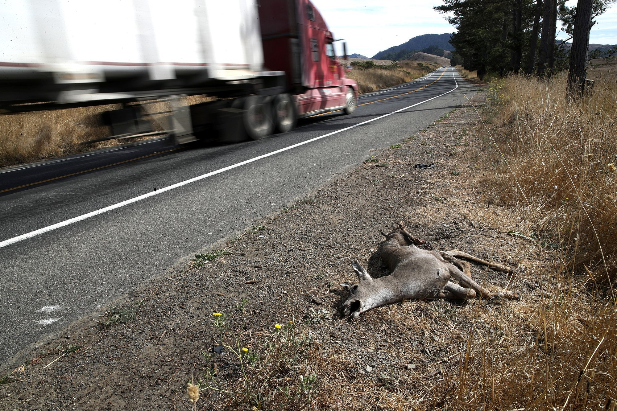 Some Californians may soon be able to eat their roadkill. That's already legal in more than 20 US states