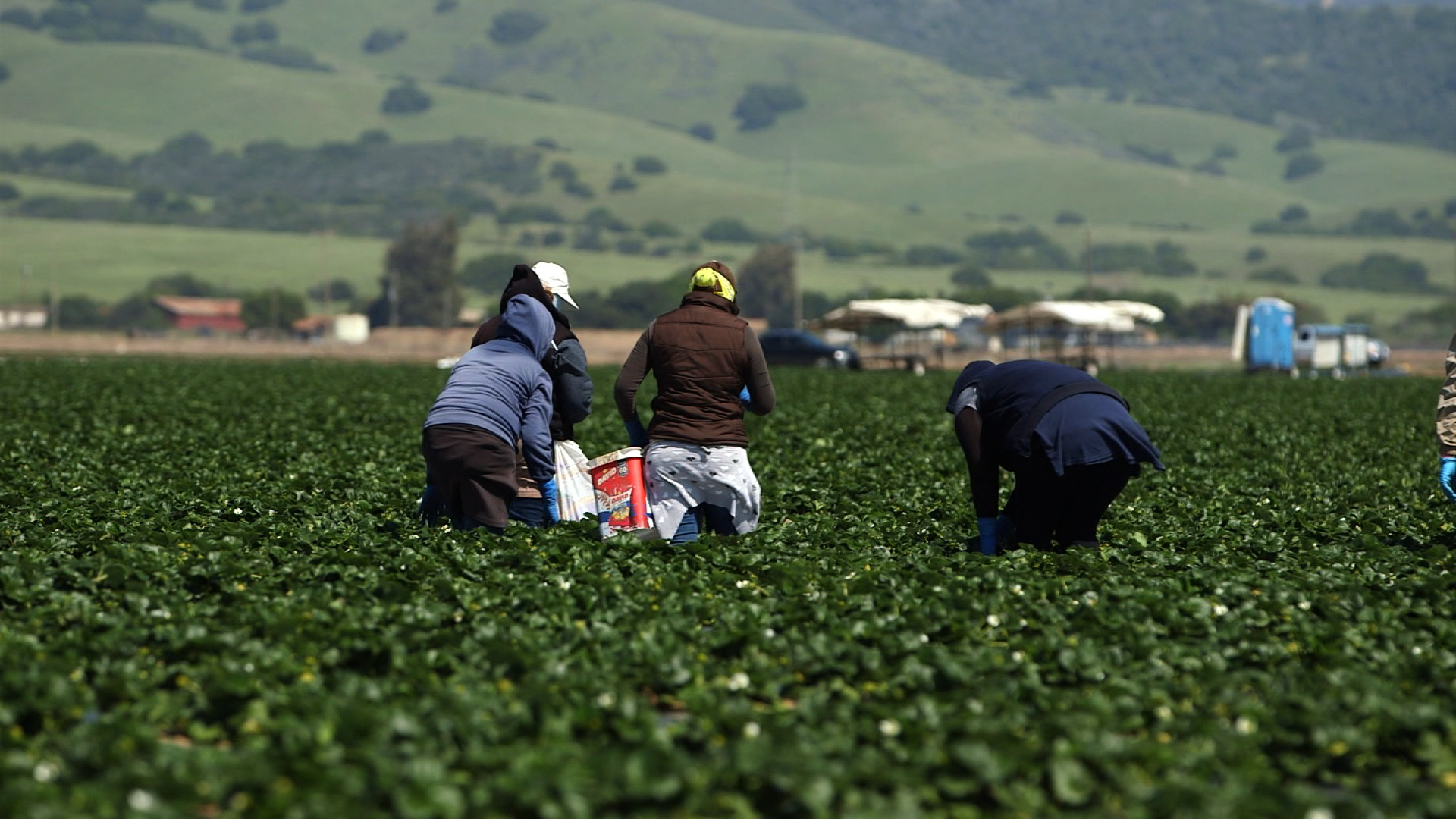 House votes to provide a pathway to citizenship for thousands of undocumented farmworkers