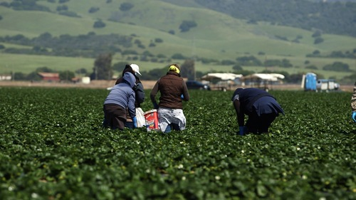 Image for House votes to provide a pathway to citizenship for thousands of undocumented farmworkers
