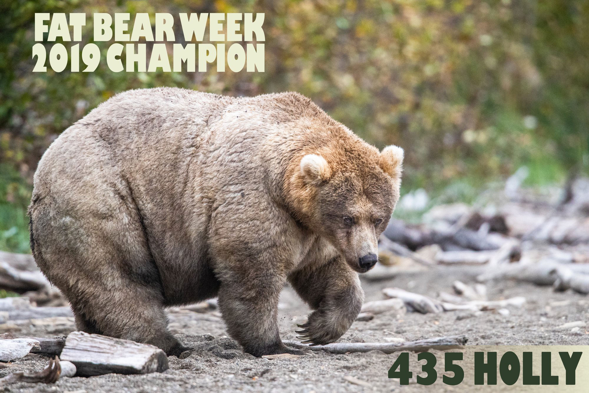 The holiday everyone needs right now is upon us: Fat Bear Week