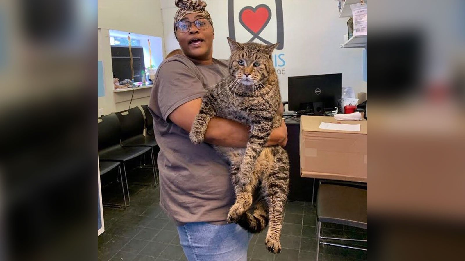 This jumbo, 26-pound cat became a star after an animal shelter said he needed a home