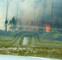 A gender reveal party ignited a 10-acre brush fire in Florida, fire officials say