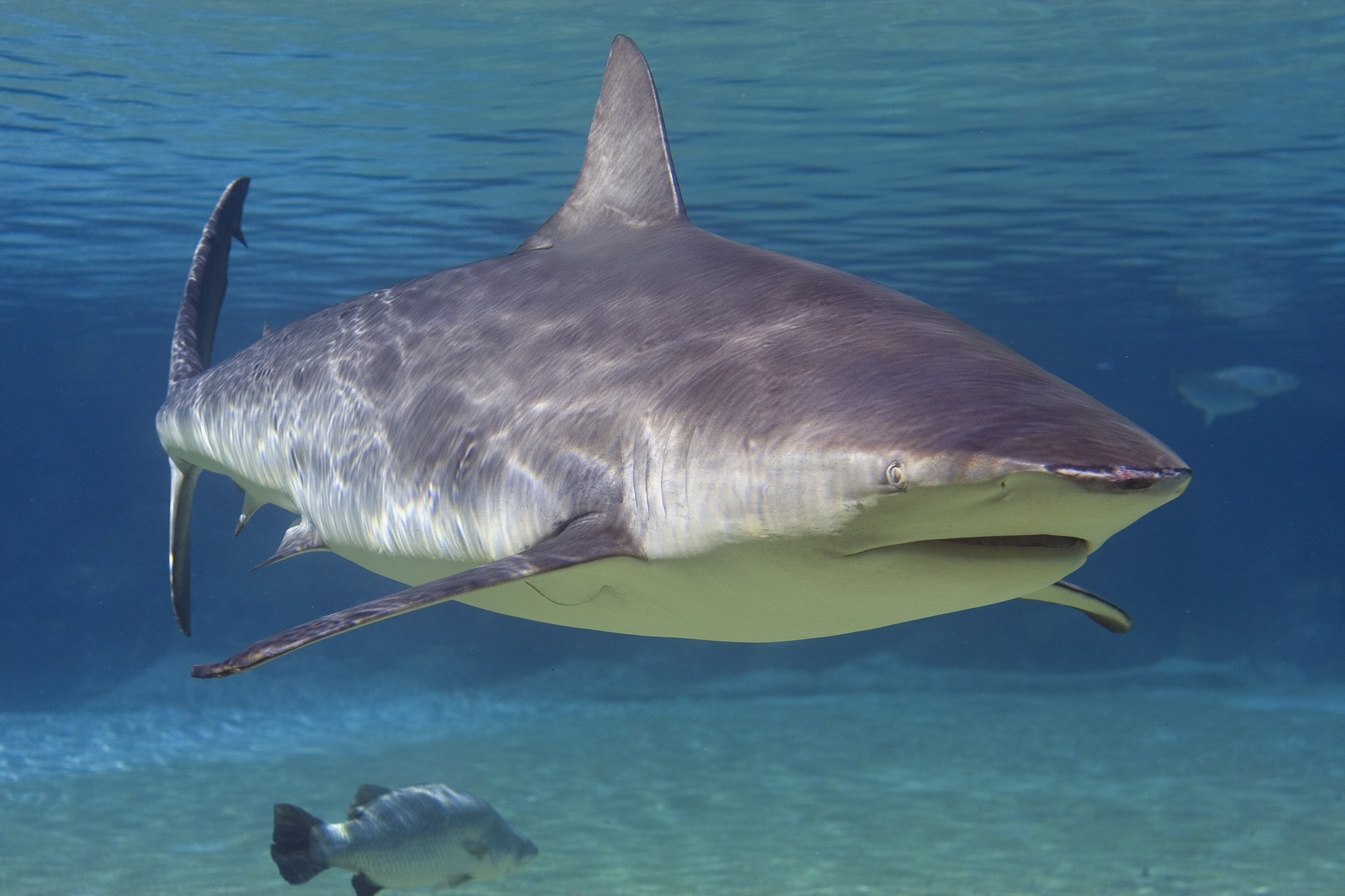 Florida is the shark attack capital of the world, again